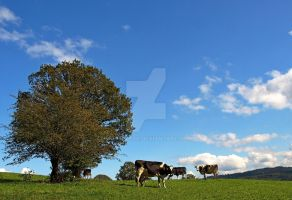 Cows can touch the sky by MDGallery