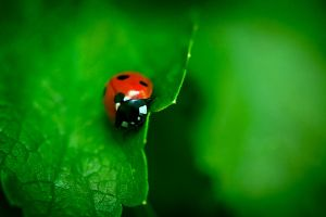 Lady Bug by mairlin