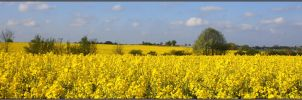 Spring Panorama by Clu-art