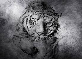 Tiger - Drawing by Nicksman24