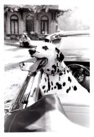 Dalmatian Dreams by littleredelf