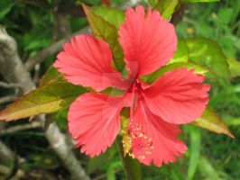 Tropical Flower by italianstyle