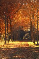 Autumn Signs 5 by AtelierAntares