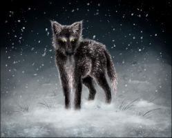 The Black Wolf by Kanizo