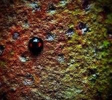Ladybug on a rusted panel by PAlisauskas