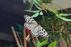 Toronto Zoo: Wings of Lace by Cypselurus
