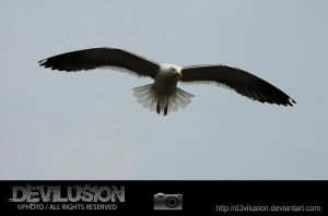 IMG_6307 by D3vilusion