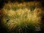 Natural Abstract 4 by wetham
