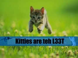 Kitties r L33t by AuricEvrion