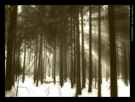 In the forest 3 by mjagiellicz