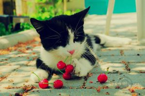 Kitty Loves Cherries by Sophibelle