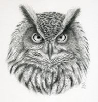 Bubo bubo - owl portrait by sschukina