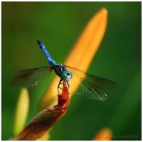 Dragon Fly by adeb1113
