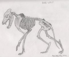 Dire Wolf Skeleton Sketch. by Catnip-War-Criminal