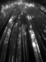Redwoods by rmisaki56