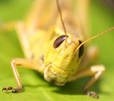 Jimminey Cricket by debgay