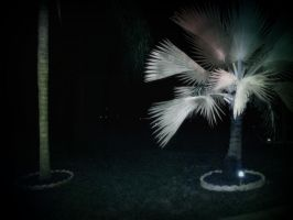Night Time Palm Tree by Hayes-Designs