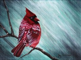 Red Bird by 3ampainter