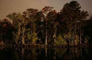 Caddo Lake by terraforms