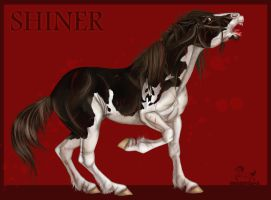 Shiner the Wretched by pookyhorse