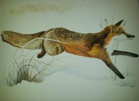 Running fox watercolour by BecciES