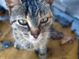 I found this pretty little kitty on my porch today by kshelton2011