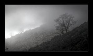 the fog by cradeloso