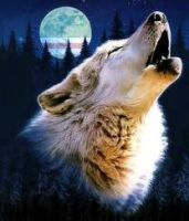 Howling wolf 1 by Mephystal-4eva