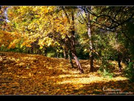 yellow carpet... by Iulian-dA-gallery