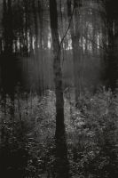Dark forest 3 by afewimages