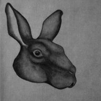Rabbit. by DancesWithShadows