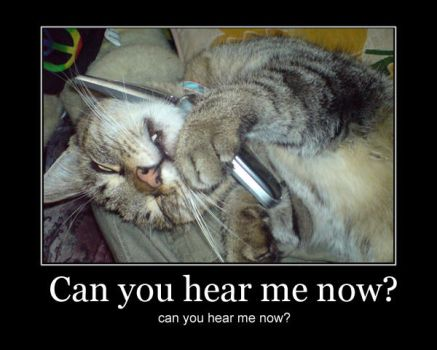 Can you hear me now? LOLCat by Chop-StiXz