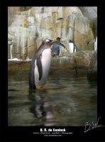 Manchot  Penguin by bdec