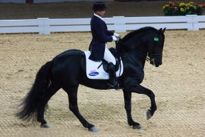 STOCK - Equitana 2013-494 by fillyrox
