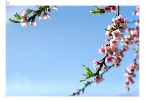 Goodbye Peach Blossoms by Supreme24