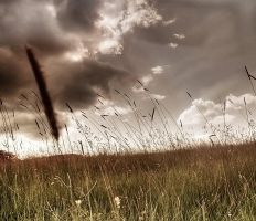 The Field by yavorancho