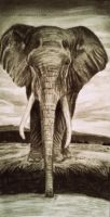 Elephant drawing by lyyy971