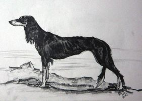 Saluki by FreeMeadows