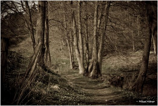 The Path by MKlver
