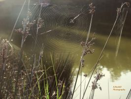 Spider web by AbdelhakBoukili