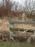 fence and tall grass 2 by JensStockCollection