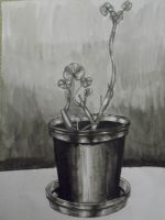 plante en pot by Angeelleick