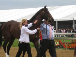 PRE-RACE Preakness: Orb by Anti-Bumblebee