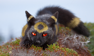 If Pokemon were real: Umbreon by Bedupolker