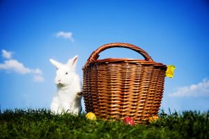 Easter bunny by jfphotography