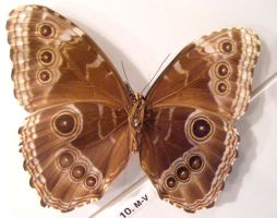 moths and butterflies stock124 by hatestock