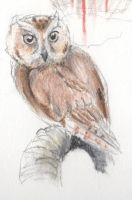 Owl by Zemie