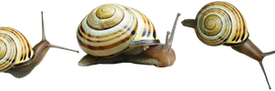 snails png by gd08
