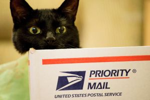 Priority Mail Box Cat II by GoGoGodzirra