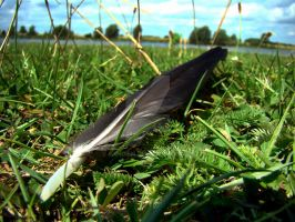 Lonely feather by Sandien